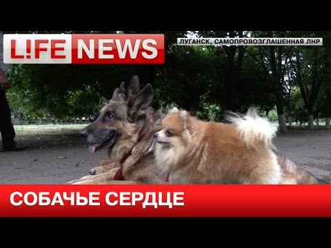 Четвероногие питомцы спасли свою хозяйку от украинских снарядов