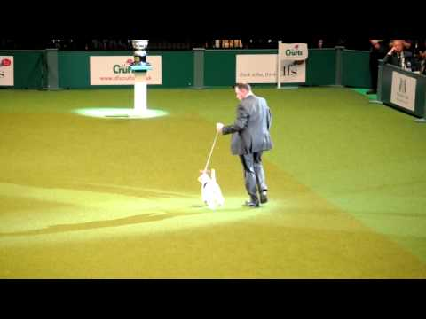 Best In Show Crufts 2011
