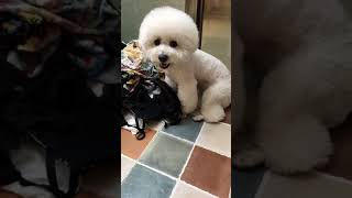 Look at these cute and funny puppies dogs 1850