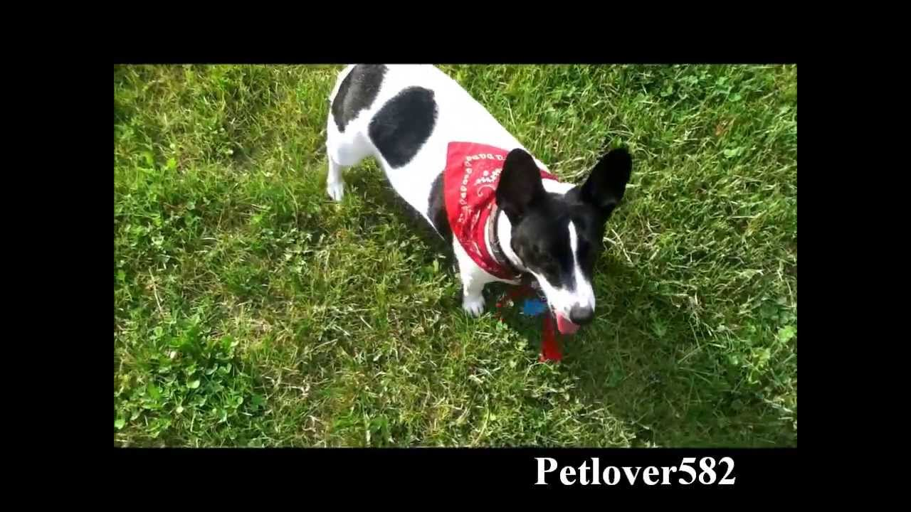 Cool Dog Training Tricks