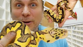 UNBOXING SOME RARE SNAKES!!! | BRIAN BARCZYK