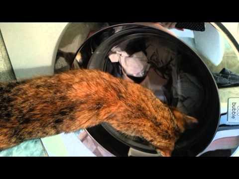 Кошка стирает на машинке автомат