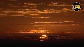 safariLIVE - Sunrise Safari - January 16, 2019