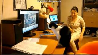 Cat hits computer monitor playing bird video