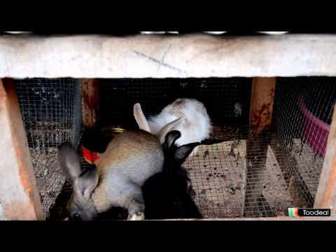 vente de lapins Abidjan