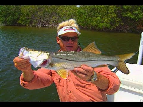 Addictive Fishing: Space Coast Canals - REDFISH, SNOOK & TARPON in residential canals