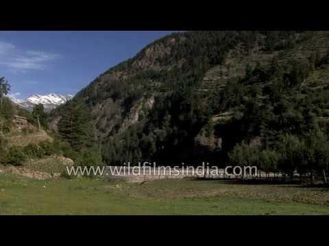 Stream flows en route Lamkhaga pass - Himachal Pradesh