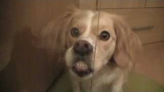 Make a face - funny dog trick
