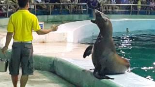 Xem hải cẩu biển biểu diễn tại tuần châu - hạ long