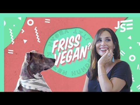 Hunde und Katzen vegan ernähren? | Jäger & Sammler