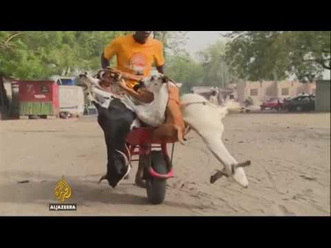 17337 economics handel Al Jazeera Nigeria puts restrictions on cattle to curb Boko Haram's income