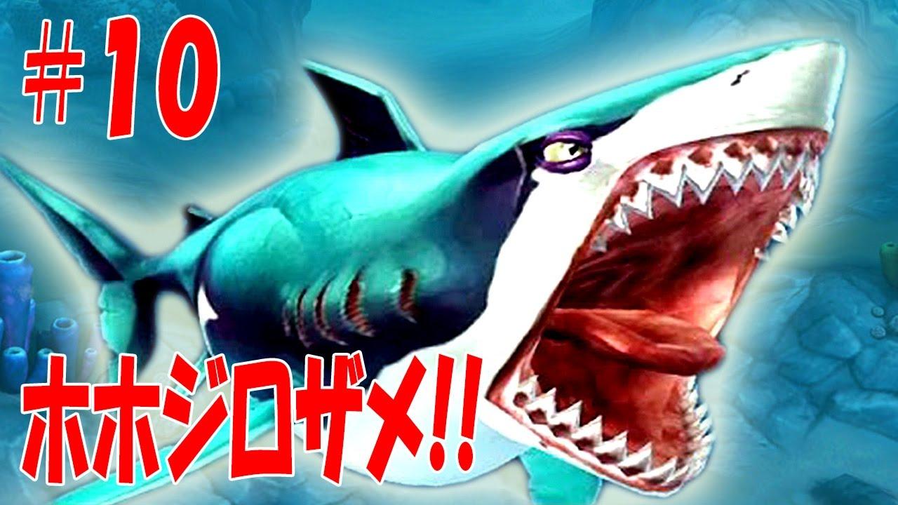 ホホジロザメの画像 p1_15