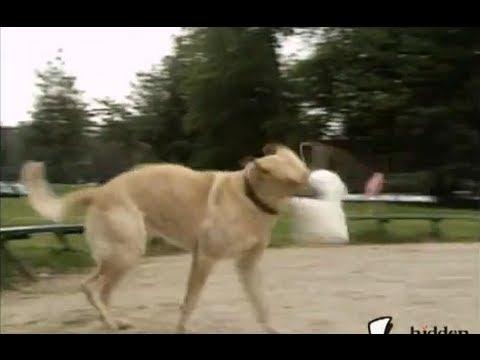 Robot Dog Attack