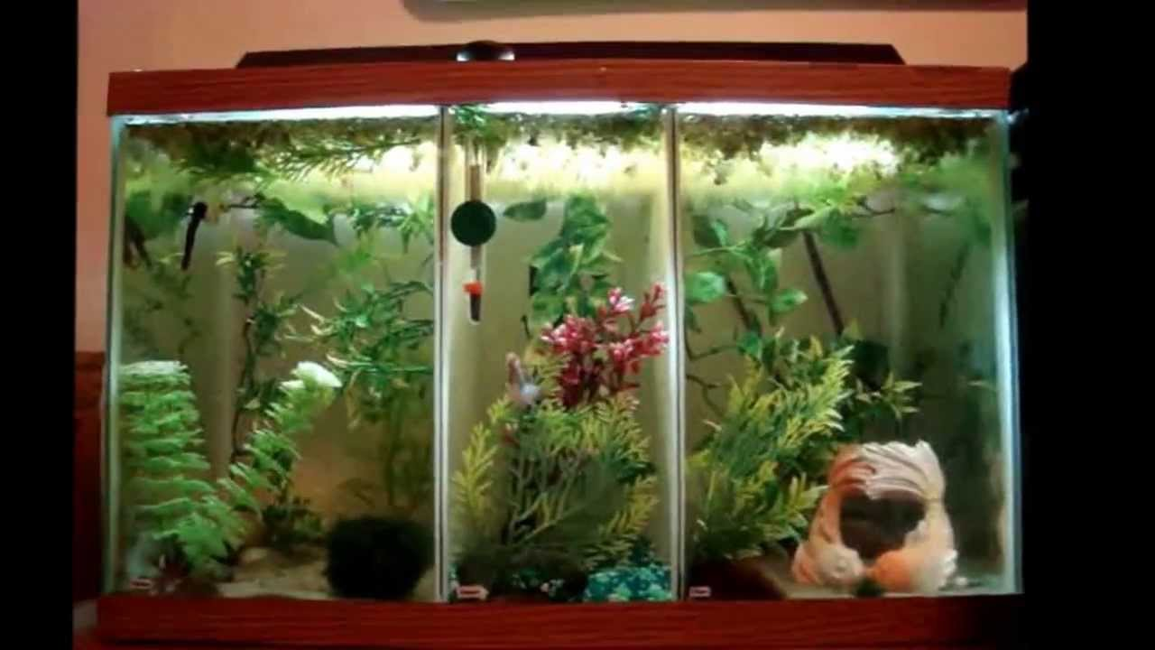 Custom betta fish tank youtube for Split fish tank