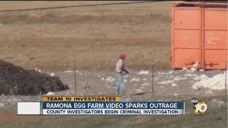 Egg farm video sparks outrage