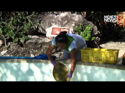 Xcaret Eases Sea Turtles' Long Journey
