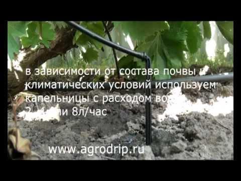 Капельный полив на винограде.avi