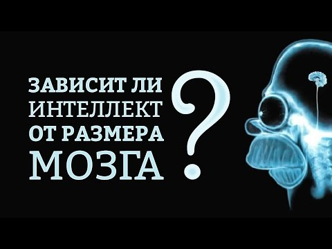Зависит ли интеллект от размера мозга? | IQ