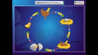 Science - Reproduction in Animals - Life Cycle of animals which lay Eggs - CBSE Class 4 Science (IV)