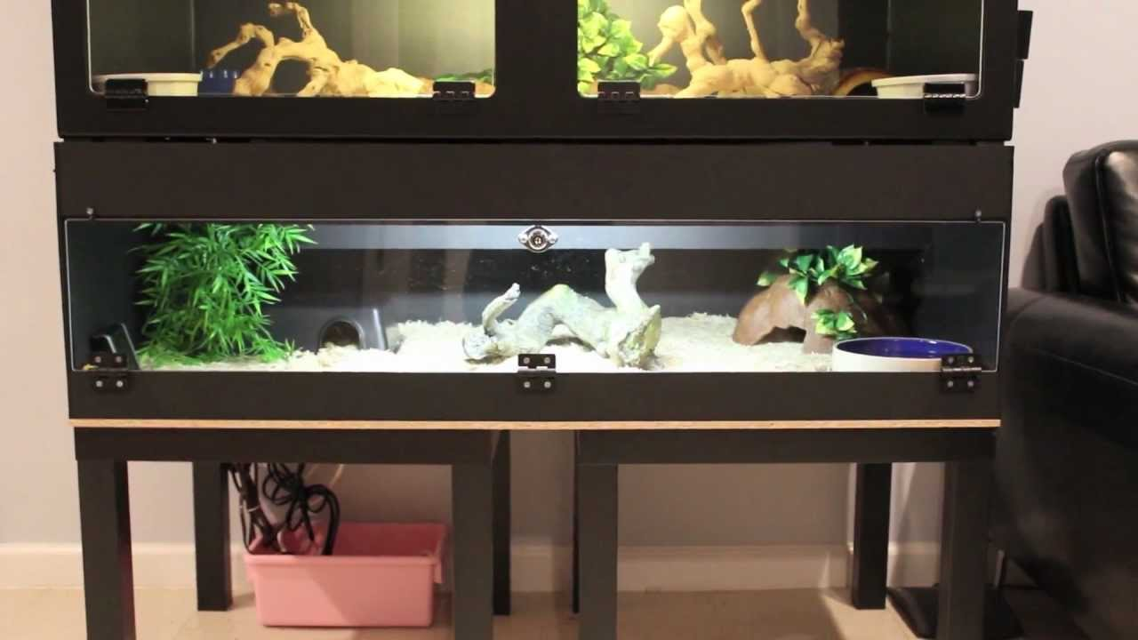 Snake Reptile Room Tour With New Cage Youtube