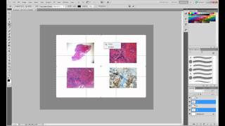 Creating a 4-figure panel in Photoshop