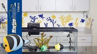 How to Build a Fish Quarantine Tank