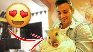 MEETING LOGAN'S PIG FOR THE FIRST TIME **priceless**