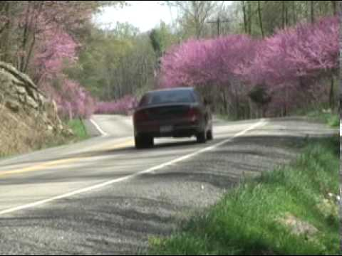 Journalist Greg Larry reports on the Redbud Trees that line Route 50 in Hampshire County, WV. The trees form an almost continuous line for nearly 2 miles. Th...