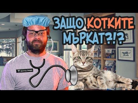 ЗАЩО котките мъркат?