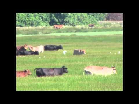 Antigua Beats Drought with New Crop Varieties