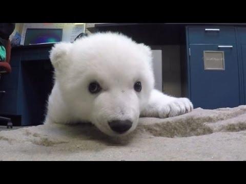 Adorable polar bear cub gets a name