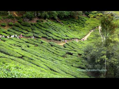 Cameron Highlands, Malaysia (1080HD)