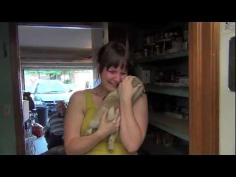 Surprise Pug Puppy