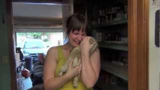 ビーグル犬を亡くし悲しみに沈む彼女へパグの子犬をサプライズプレゼント!