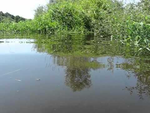 Дебрянская река Десна