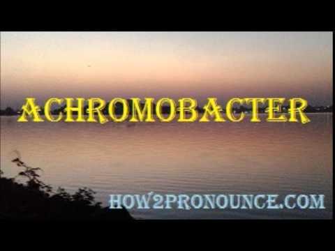 Header of Achromobacter
