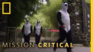 Undercover Pandas   Mission Critical