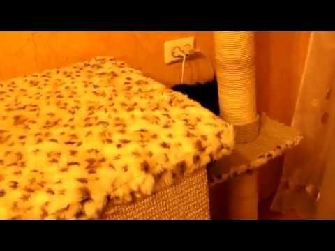 Кошкин дом.когтеточка своими руками.(Scratching Post Scratch Board Climbing Frame Toy for Cat)
