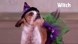 8 Costumes for Your Pet | ? Halloween Style Scene ? Glam.com