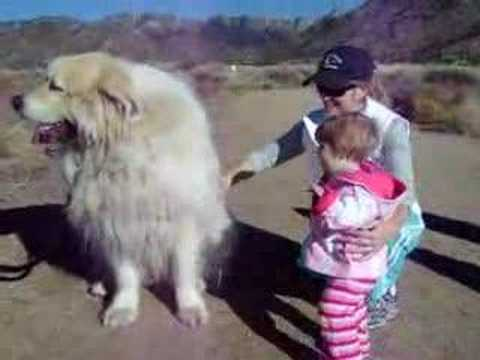 Olivia Befriends the Largest Dog in NM