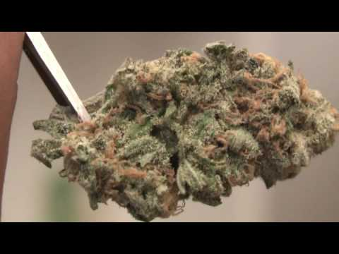 San Diego Weed Review #7 : Oasis Herbal Center's Magic & Blue Dream Video