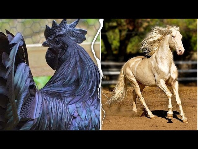 20 Animals With Rare Color Patterns You Won't Believe Are Real