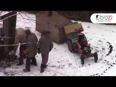 Zabíjení Norků Na Kožešinových Farmách V ČR