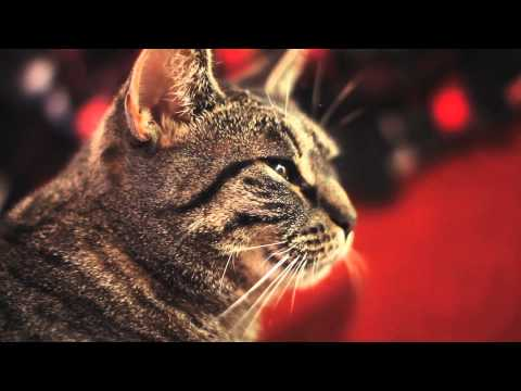 Gatos - Un gato con sentido del ritmo