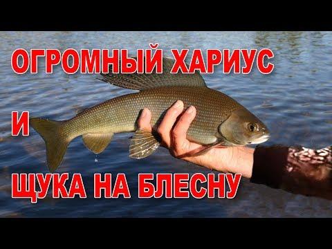 рыбалка на щуку на севере видео