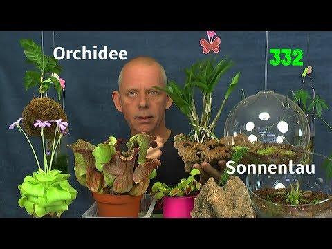 Orchidee auf dem Stein, Sonnentau im Glas und anderes