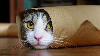 Funny Cats Compilation (Most Popular) Part 2