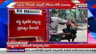 High Court Bans Cock Fights   Declares AP Govt Should Be Responsible   Mahaa News