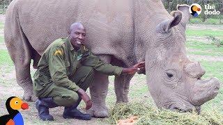 Last Male Northern White Rhino On Earth Has The BEST Caretaker | The Dodo
