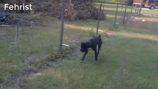 5000 Volt Ka Jatzzzzka | Electrocuted ~ Dog VS High Voltage/Fence